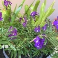 moonstruck-garden-bromeliads-and-others