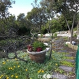 moonstruck-garden-garden-path